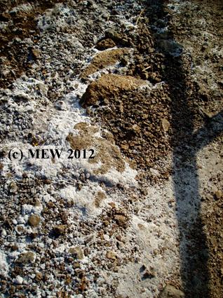 P8230531 copy MEW